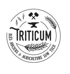 Triticum